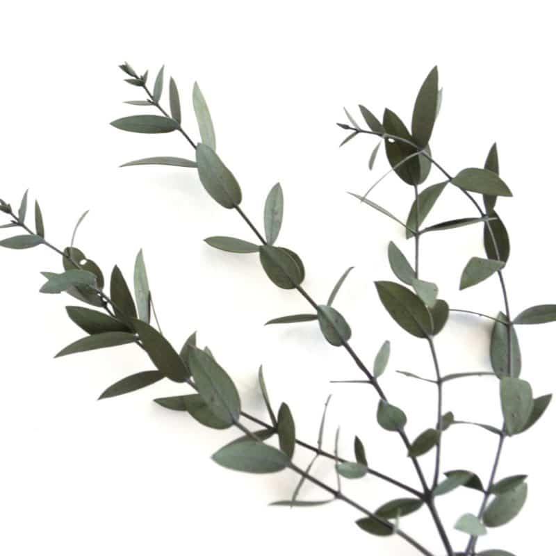 eucalipto para decorar bodas